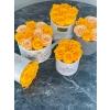 7-kollase roosiga karp